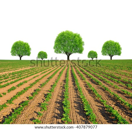 Spring field with trees on white background. - stock photo