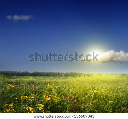 Spring field with wild flowers against the sky - stock photo