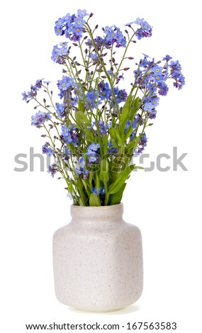 Spring first  blue mini flowers in ceramic pot isolated - stock photo