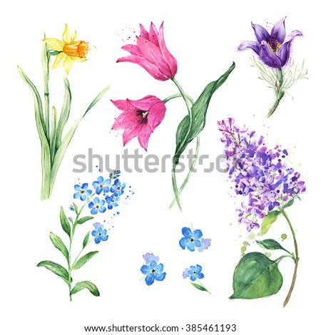 Spring floral set. Collection with watercolor flowers, Anemone, Narcissus, Daffodil, Lilac flowers, Tulip, Forget-Me-Not Flower - stock photo