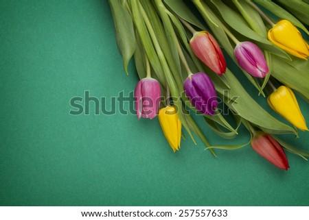 spring flower background - stock photo