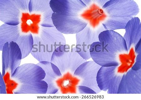 spring flower petals close up - stock photo