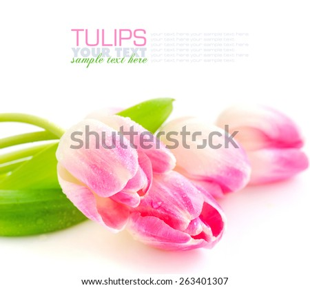 Spring flower pink tulips bouquet isolated on white background - stock photo