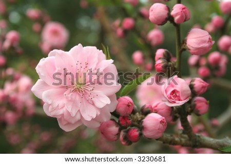 Spring flower (series) - stock photo