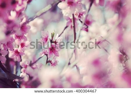 Spring flower tree - stock photo
