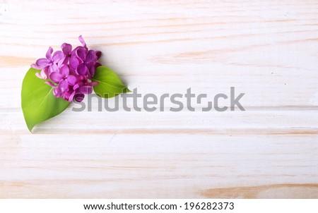 Spring flower, twig purple lilac with leaf on white wooden background. Syringa vulgaris. - stock photo