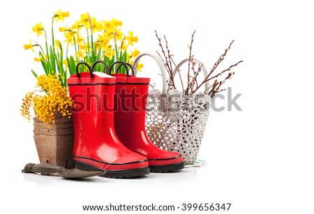 Spring flower yellow narcissus garden still life from red boot. Isolated on white background - stock photo