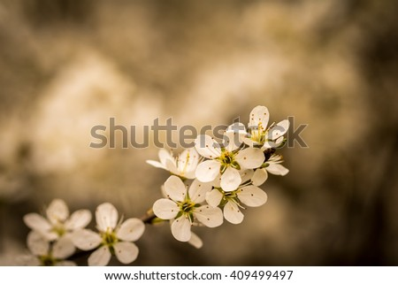 Spring flowers and blurred background in vintage color tone - place for text - stock photo