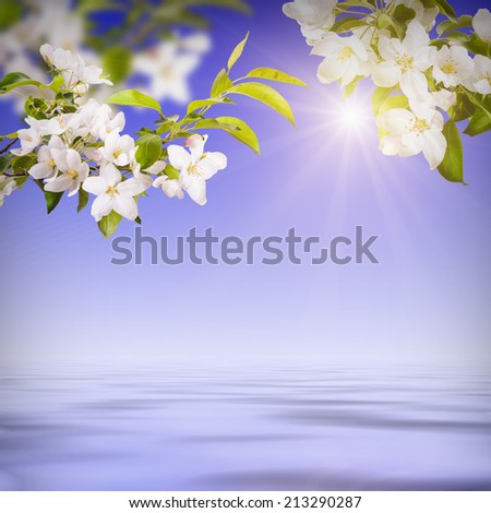 Spring flowers background reflected in water - stock photo