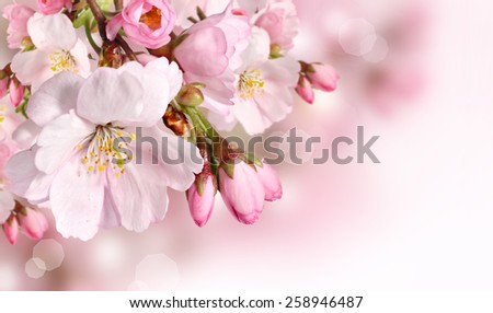 Spring flowers background with pink blossom - stock photo