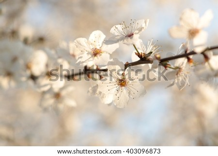 Spring flowers blooming on a branch of a tree. - stock photo