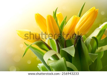 Spring Flowers bunch. Beautiful yellow Tulips bouquet. Elegant Easter or Mother's Day gift over nature green blurred background. Springtime.  - stock photo