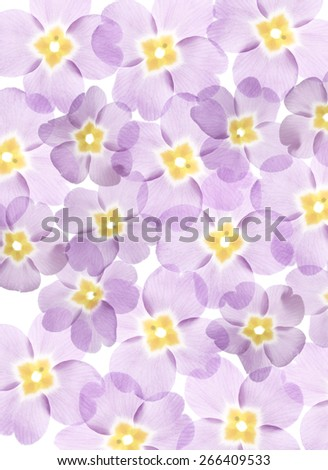 spring flowers close up - stock photo