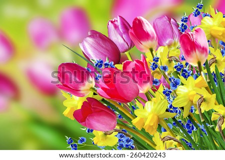 Spring flowers daffodils and tulips - stock photo