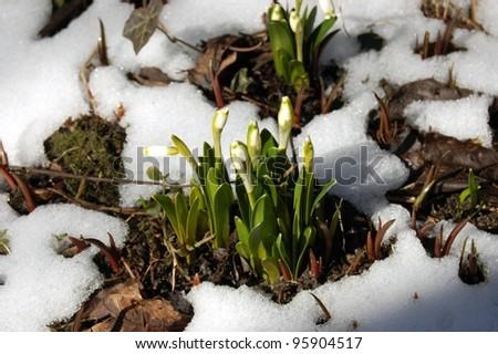 Spring flowers  in garden - stock photo