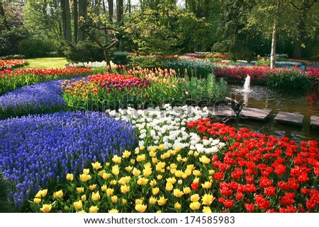 Spring flowers in park - stock photo