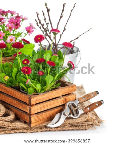 Spring flowers in wooden bucket with garden tools. Isolated on white background - stock photo