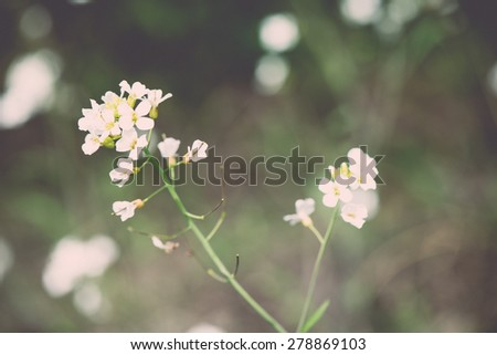 spring flowers on green background with plants and branches - retro vintage effect - stock photo