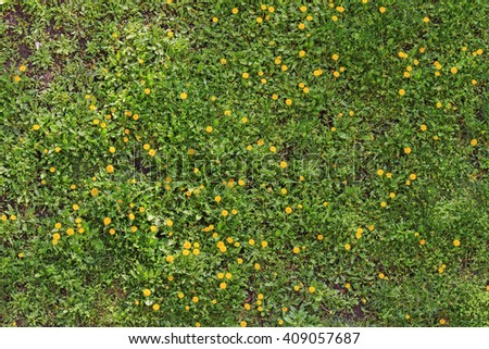spring flowers on green grass,Taraxacum, primroses, yellow flowers - stock photo