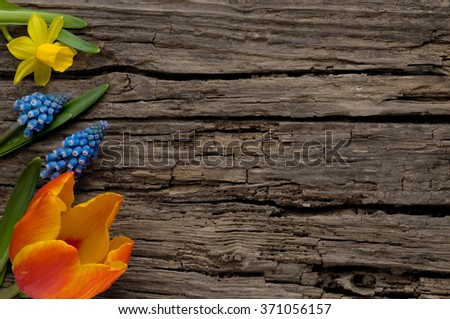 Spring flowers on old wood with copyspace - stock photo