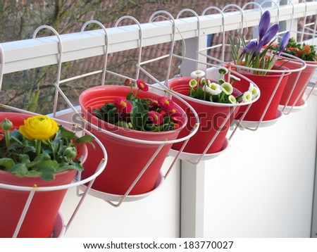 Spring flowers on the balcony  - stock photo