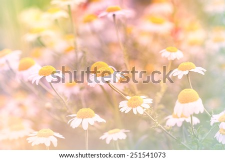 Spring flowers on the meadow  - stock photo