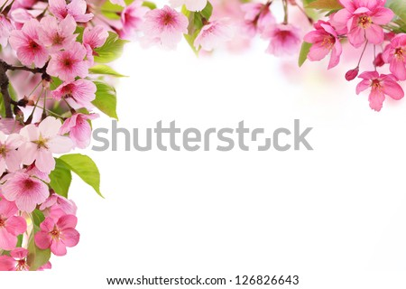 Spring flowers on white background with copy space - stock photo