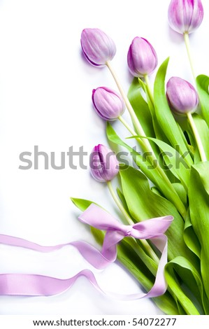 spring flowers pink tulips with pink ribbon over white background - stock photo