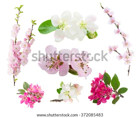 Spring flowers set  -  fresh flowers  tree twigs with blooming spring flowers isolated on white background - stock photo