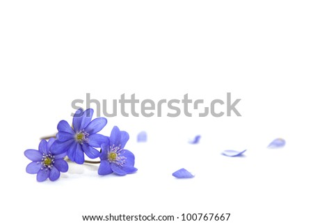 Spring flowers. Snowdrop on the white background - stock photo