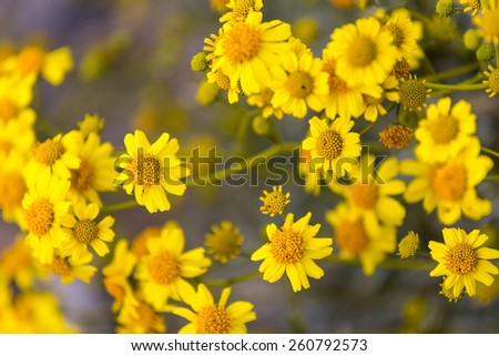 Spring flowers starting to bloom after a long winter - stock photo