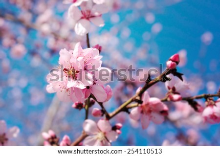 Spring flowers with blue background - stock photo