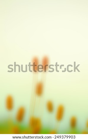 Spring flowers with blur for background  - stock photo