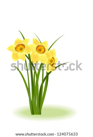 Spring Flowers. Yellow narcissus on white background with space for your text. Raster illustration. Vector file included in portfolio - stock photo