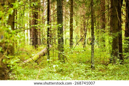 spring forest - stock photo