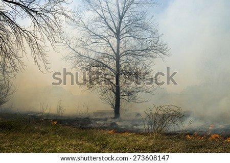 Spring forest fire with a huge amount of smoke from burning grass and leaves - stock photo