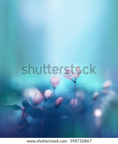 Spring forest flowers primroses on a beautiful blue background. Macro. Beautiful blurred gentle sky-blue background. Floral background. - stock photo