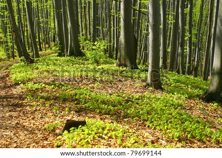 Spring forest foliage - stock photo