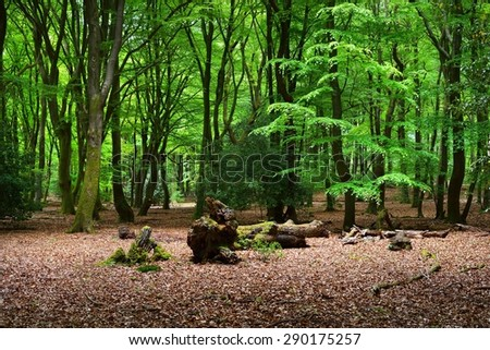 Spring forest in the Netherlands - stock photo