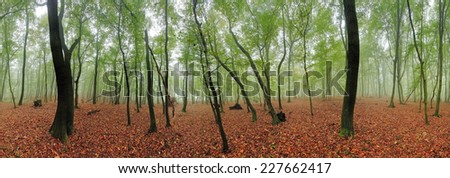 Spring forest 360 panorama at mist - stock photo