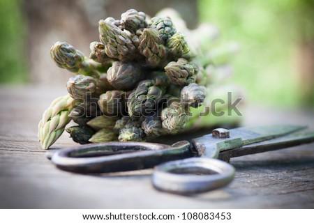 Spring garden concept. Freshly harvested asparagus on wooden background - stock photo