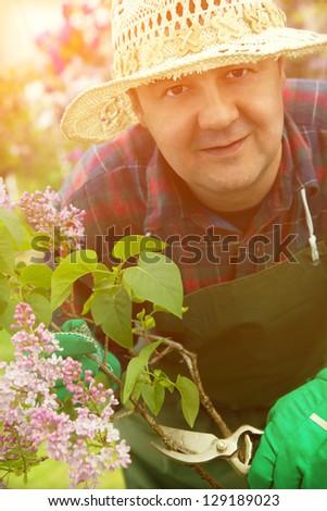 Spring garden concept. Male gardener is doing garden work around lilac flowers. - stock photo