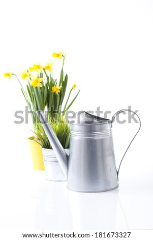 spring gardening concept with daffodil flowers and watering can - stock photo