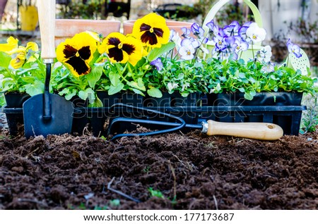 Spring gardening.  Pots of violas and pansies with trowel, cultivator, and watering can on cultivated soil.   - stock photo
