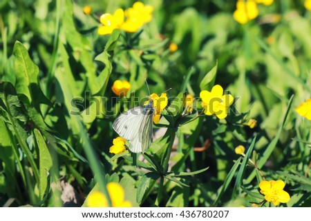 spring grass and flower in a field - stock photo
