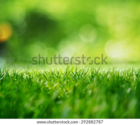 Spring grass in sun light and defocused green background. Blurred green natural background. - stock photo