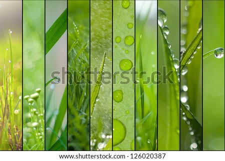 Spring green collage - stock photo