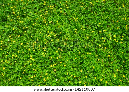 Spring green grass texture with flowers - stock photo