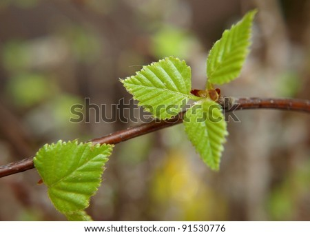 Spring green leaves - stock photo