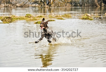 Spring hunting of ducks and geese - stock photo